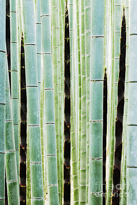 Over-exposed Photograph - Detail Of Bamboo In A Forest by Jeremy Woodhouse