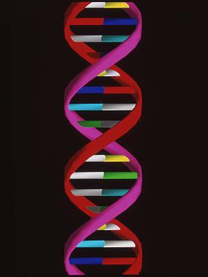 Molecular Graphic Photograph - Dna Molecule by Mehau Kulyk