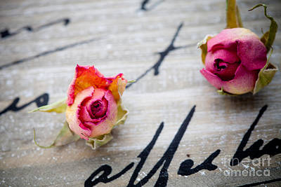 Single Rose Stem Photograph - Dried Roses by Kati Molin