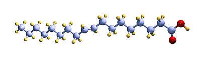 Margarine Photograph - Elaidic Acid, Computer Model by Dr Mark J. Winter