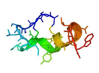 Endothelin-1 Molecule Art Print by Laguna Design