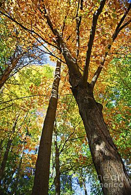 Fall Forest Art Print by Elena Elisseeva
