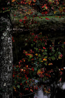Photograph - Fall Leaves  by Frank DiGiovanni