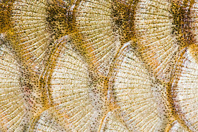 Fish Scales Background Art Print by Odon Czintos