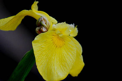 Shweta Singh Photograph - Flower by Shweta Singh