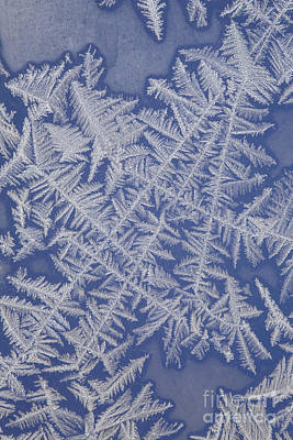 Photograph - Frost On A Window by Ted Kinsman