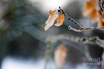 Photograph - Frosty Leaf by Kati Finell
