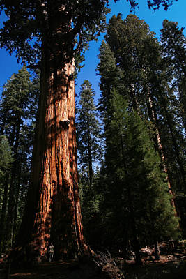 Photograph - General Sherman Sequoia National Park by Benjamin Dahl