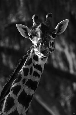 Photograph - Giraffe by Jason Blalock