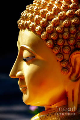 Nose Photograph - Golden Buddha by Adrian Evans