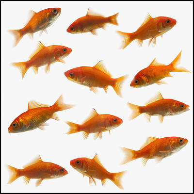 Goldfish Art Print by Mike Kemp