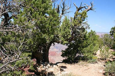Grand Canyon National Park Arizona Usa Art Print by Audrey Campion