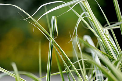 Photograph - Grass by Douglas Pike