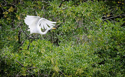 Great Egret Art Print by Mike Rivera