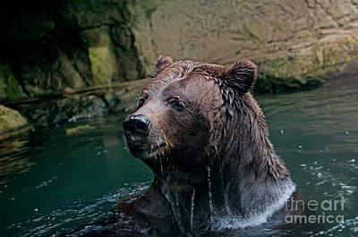 Digital Art - Grizzly Bear Or Brown Bear by Carol Ailles