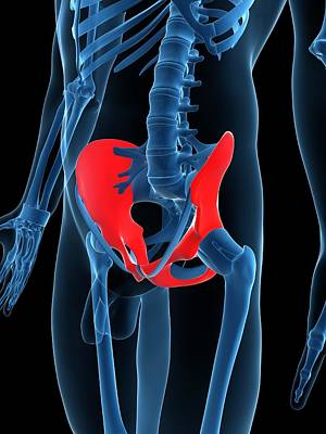 Hip Bones, Artwork Art Print by Sciepro