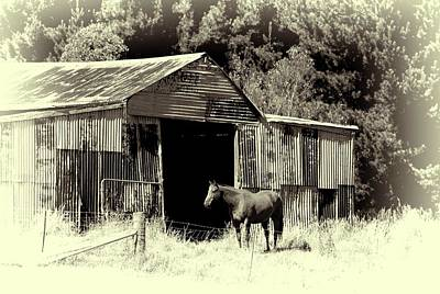 Horse And Old Barn Art Print