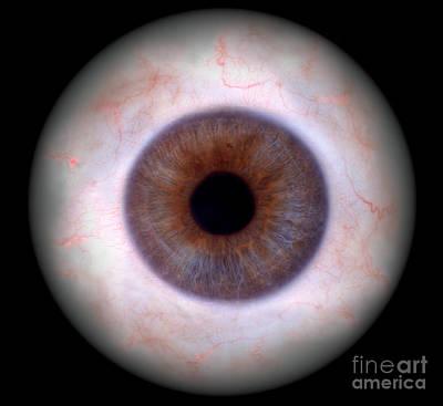 Photograph - Human Eye by Raul Gonzalez Perez