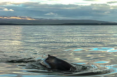 Photograph - Humpbach Whale by Jorgen Norgaard
