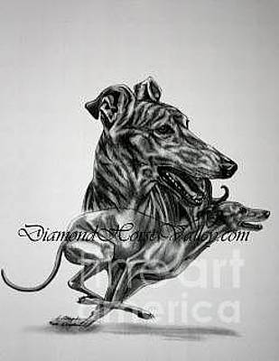Rescued Greyhound Drawing - I Am A Winner by L Scepkova