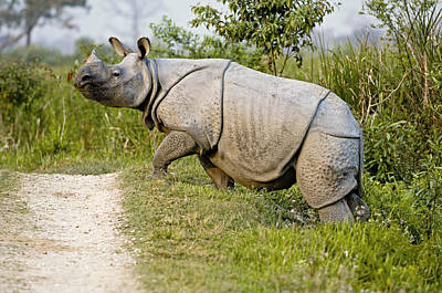 Indian Rhinoceros Art Print by Tony Camacho