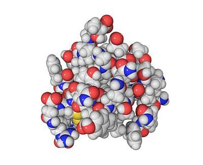 Insulin Molecule Art Print by Laguna Design