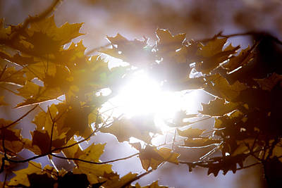 Autumn Leaf Photograph - Into The Light by Phil Koch