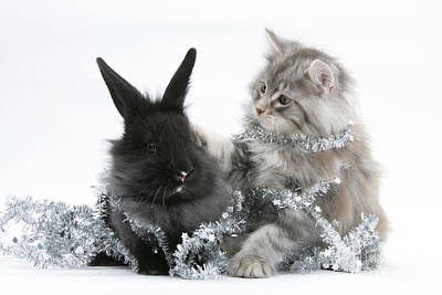 Kitten And Rabbit Getting Into Tinsel Art Print by Mark Taylor