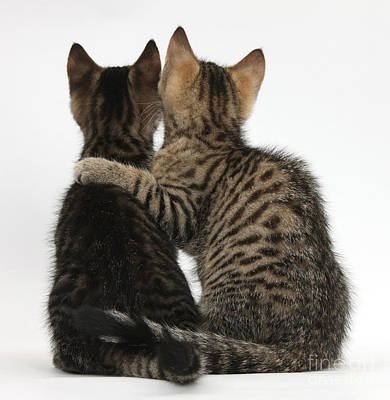 Photograph - Kitten Companions by Mark Taylor