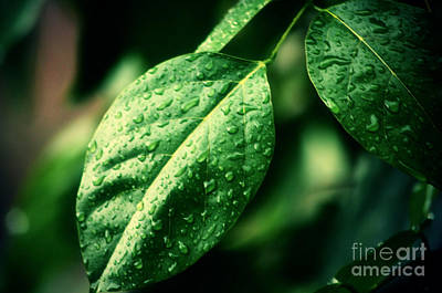 Leaf Art Print by Nilay Tailor