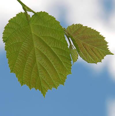 Leaf Art Print by Design Windmill
