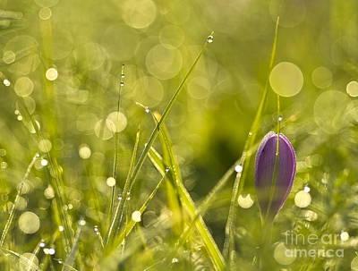 Light Flowers Art Print by Odon Czintos