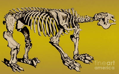 Megatherium, Extinct Ground Sloth Art Print