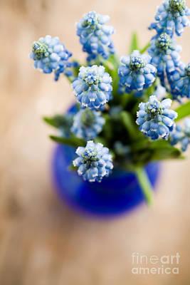 Blue Grapes Photograph - Muscari by Kati Molin