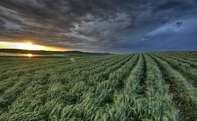 Grow Digital Art - Newly Planted Crop by Mark Duffy