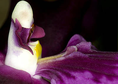 Art Print featuring the photograph Orchid Flower Bloom by C Ribet