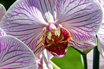 Photograph - Orchid Flower by C Ribet