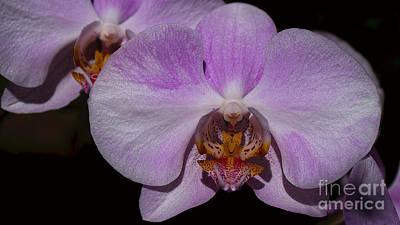 Photograph - Orchid by Mareko Marciniak