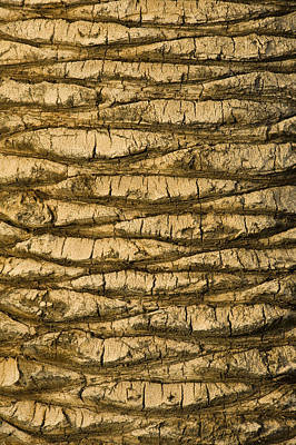 Palm Tree Trunk Close-up Art Print by Brian Stablyk