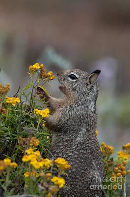 Digital Art - Point Lobos Park  by Carol Ailles