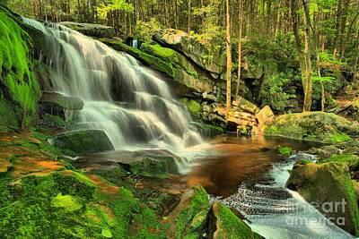 Photograph - Pool In The Forest by Adam Jewell