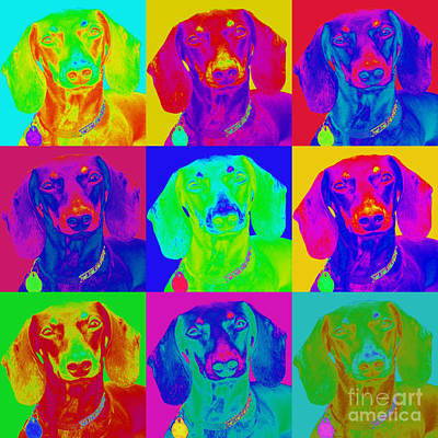Pop Art Dachshund Art Print by Renae Laughner