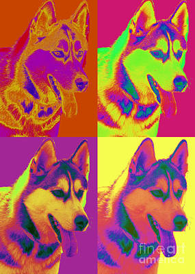 Pop Art Siberian Husky Print by Renae Laughner