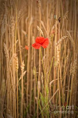 James Taylor Photograph - Poppy by James Taylor