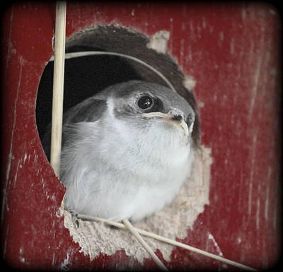 Photograph - Red Barn Birdie by Kathy Sampson