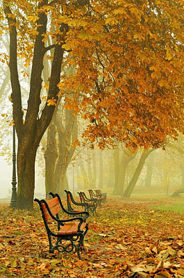 Fall Foliage Photograph - Red Benches In The Park by Jaroslaw Grudzinski