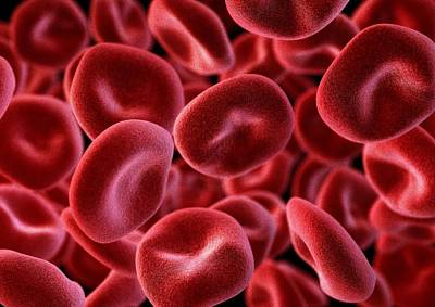 Red Blood Cells, Computer Artwork Art Print by Animate4.comscience Photo Libary
