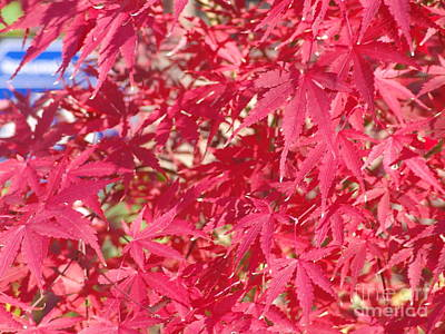 Photograph - Red Leaves 2 by Rod Ismay