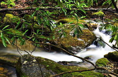 Rhododendron And Waterfall Print by Thomas R Fletcher