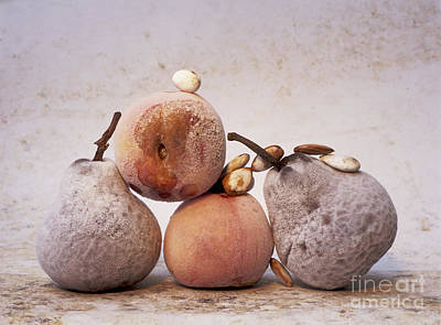 Vitamin-containing Photograph - Rotten Pears And Apple. by Bernard Jaubert